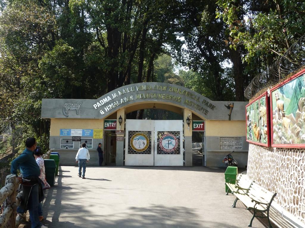 Padmaja_Naidu_Himalayan_Zoological_Park