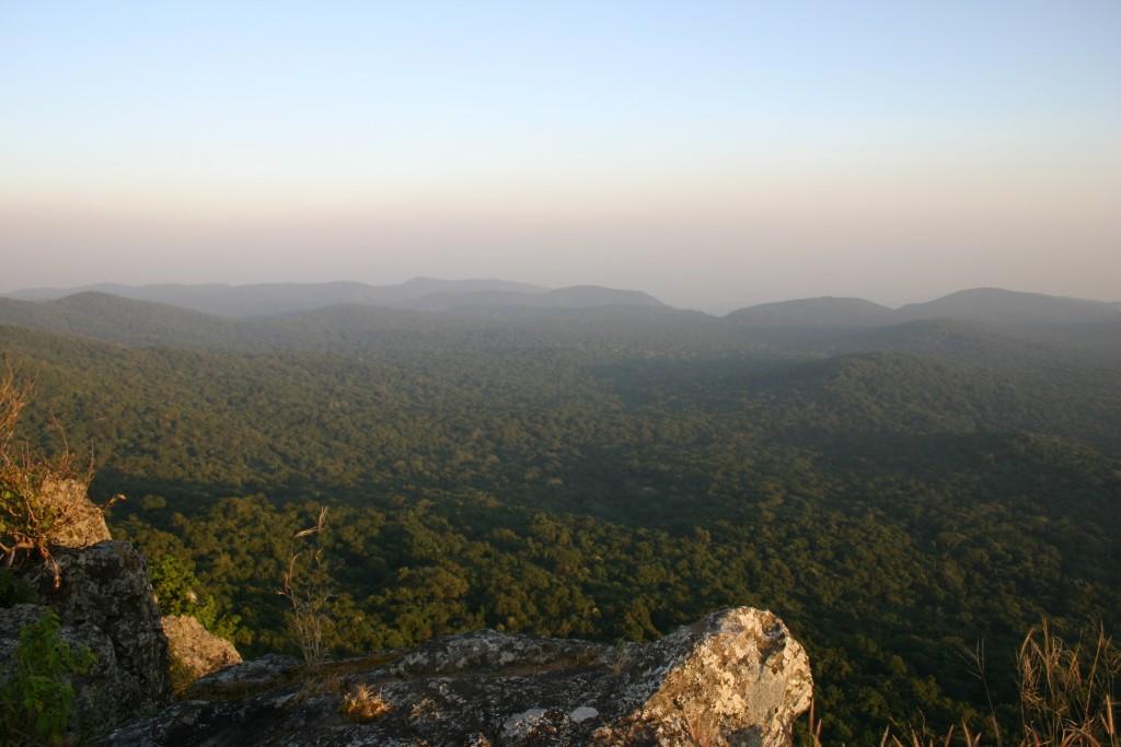 Similpal_Forest
